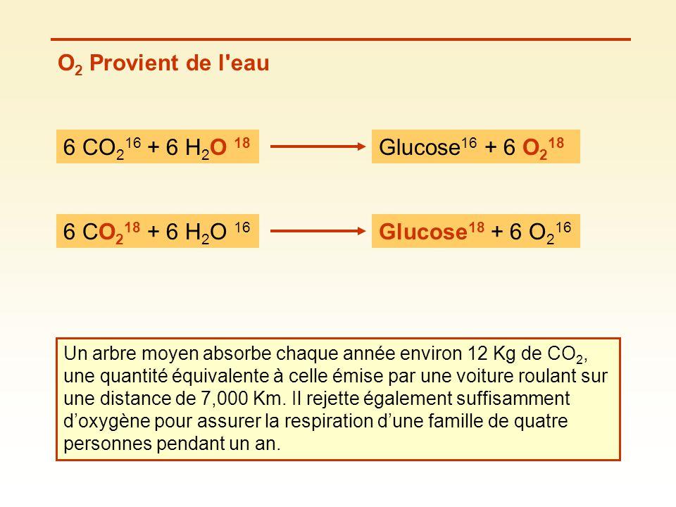 O2 Provient de l eau 6 CO216 + 6 H2O 18 Glucose16 + 6 O218