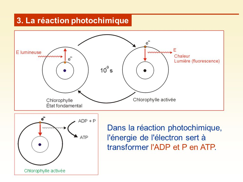 3. La réaction photochimique