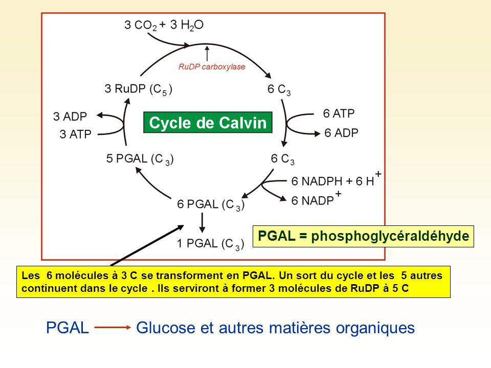 Glucose et autres matières organiques