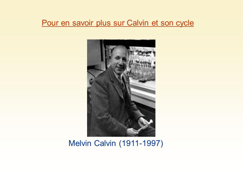 Pour en savoir plus sur Calvin et son cycle