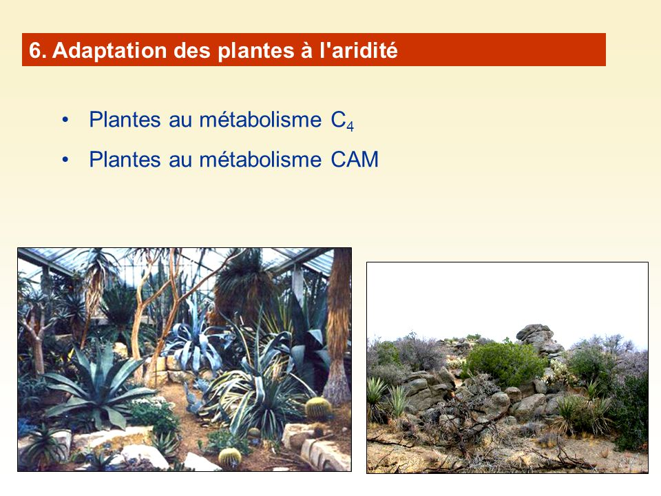 6. Adaptation des plantes à l aridité