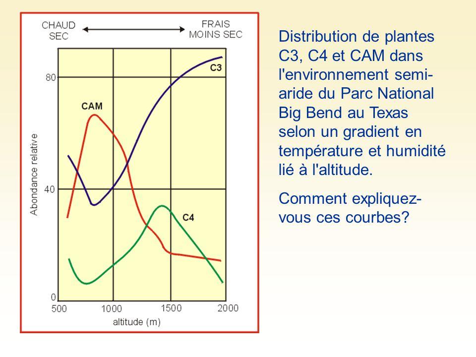 Distribution de plantes C3, C4 et CAM dans l environnement semi-aride du Parc National Big Bend au Texas selon un gradient en température et humidité lié à l altitude.