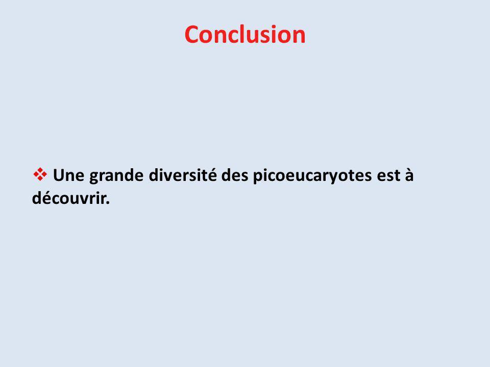 Conclusion Une grande diversité des picoeucaryotes est à découvrir.