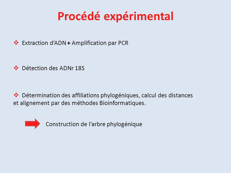 Procédé expérimental Extraction d'ADN + Amplification par PCR