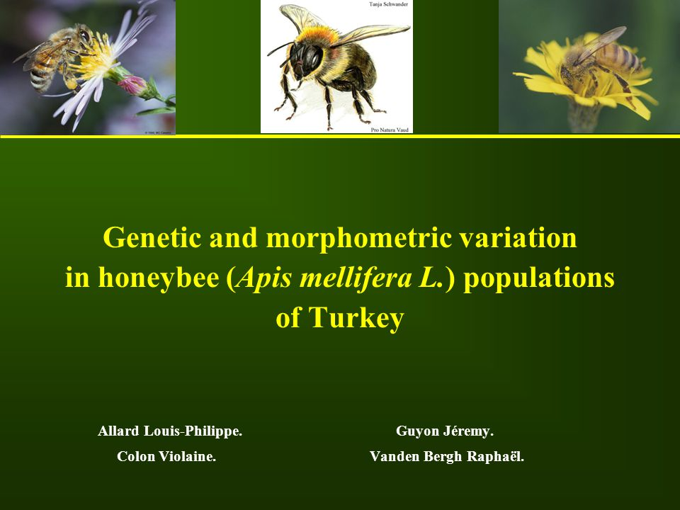 Genetic and morphometric variation