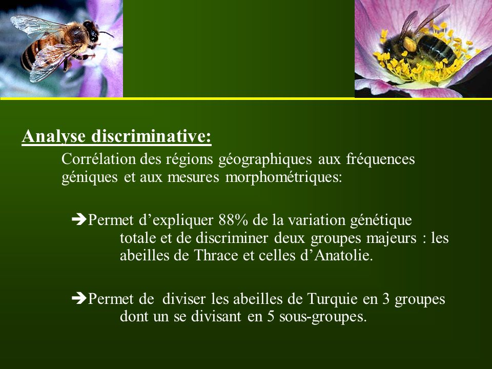 Analyse discriminative: