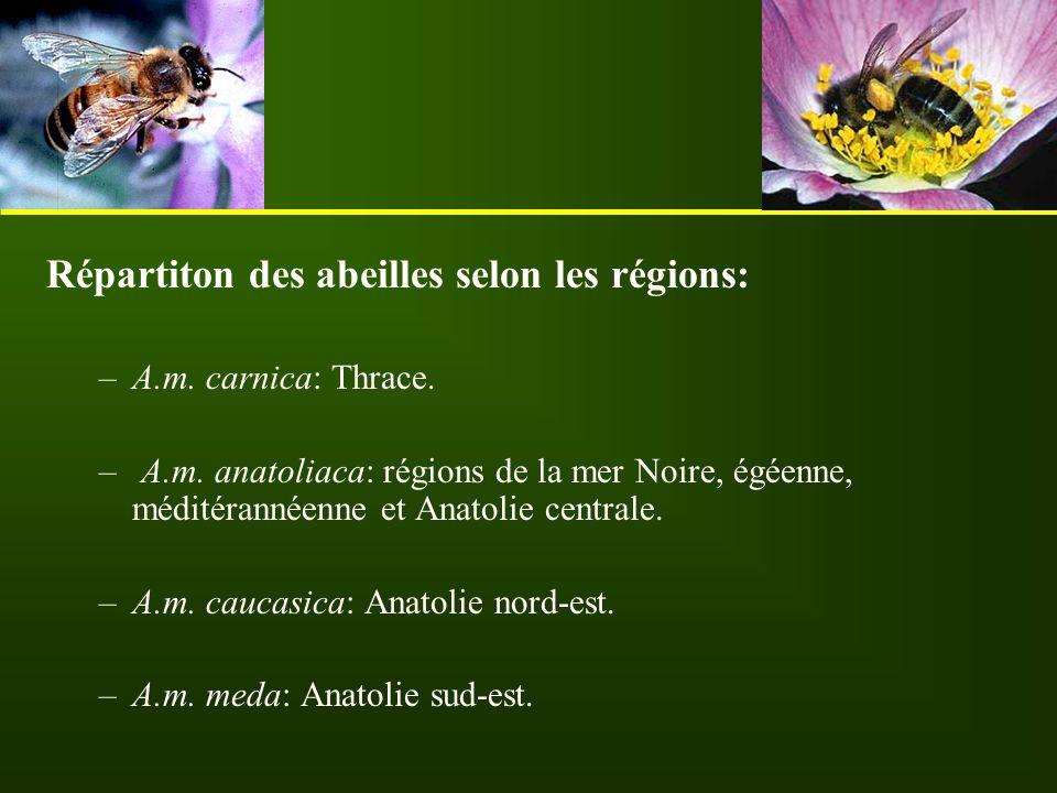Répartiton des abeilles selon les régions: