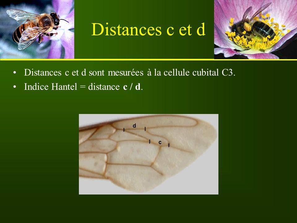 Distances c et d Distances c et d sont mesurées à la cellule cubital C3.