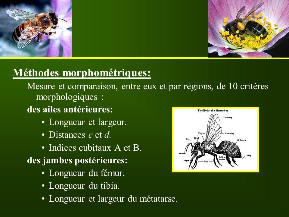 Méthodes morphométriques: