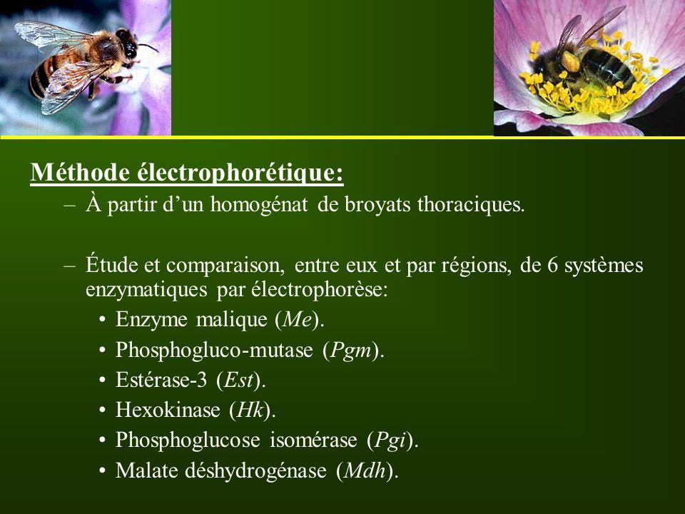 Méthode électrophorétique: