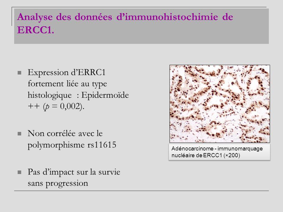 Analyse des données d'immunohistochimie de ERCC1.