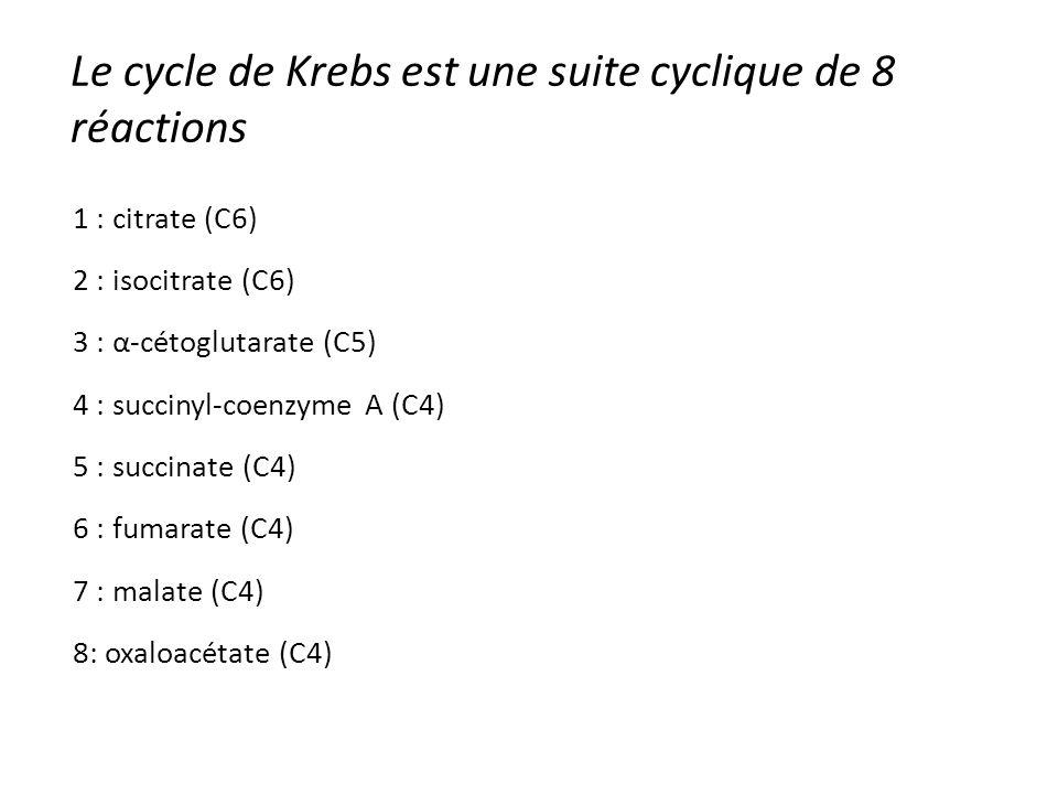 Le cycle de Krebs est une suite cyclique de 8 réactions