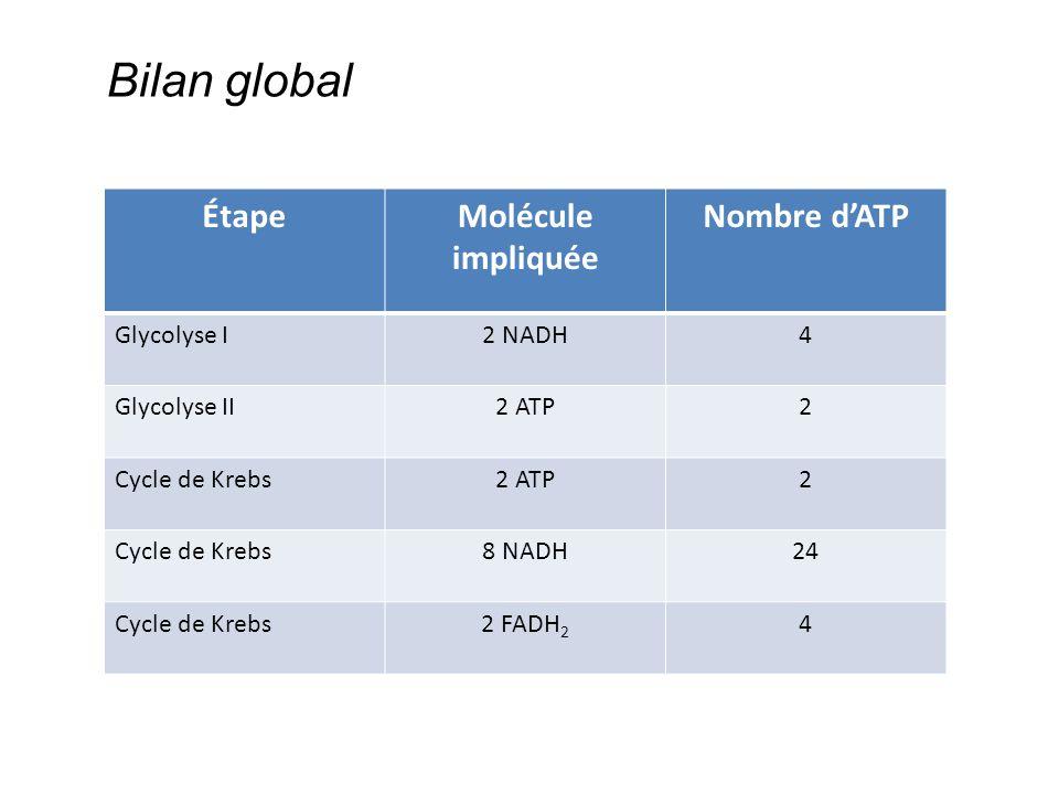 Bilan global Étape Molécule impliquée Nombre d'ATP Glycolyse I 2 NADH
