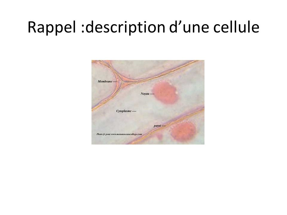 Rappel :description d'une cellule