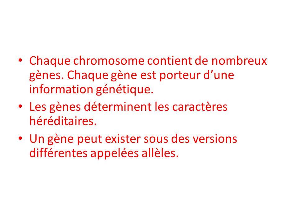 Chaque chromosome contient de nombreux gènes