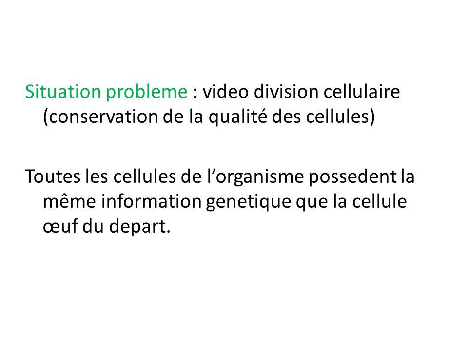 Situation probleme : video division cellulaire (conservation de la qualité des cellules)