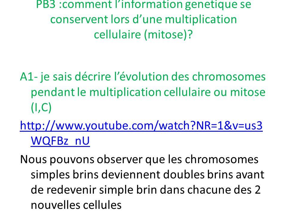 PB3 :comment l'information genetique se conservent lors d'une multiplication cellulaire (mitose)