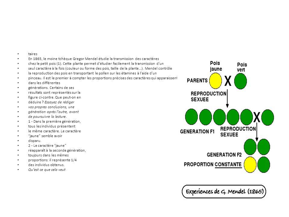taires En 1865, le moine tchèque Gregor Mendel étudie la transmission des caractères.