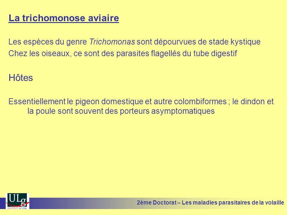 La trichomonose aviaire