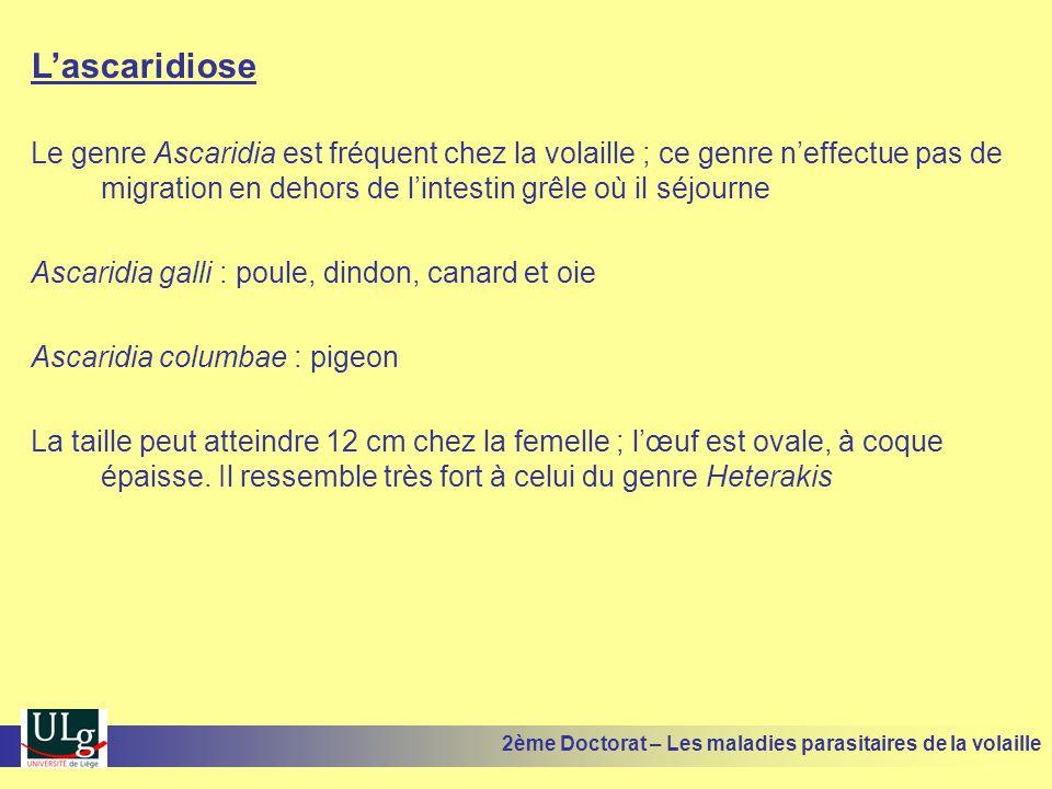 L'ascaridiose Le genre Ascaridia est fréquent chez la volaille ; ce genre n'effectue pas de migration en dehors de l'intestin grêle où il séjourne.