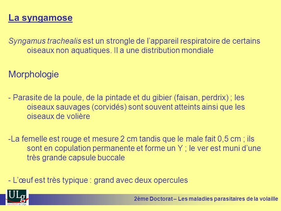 La syngamose Morphologie