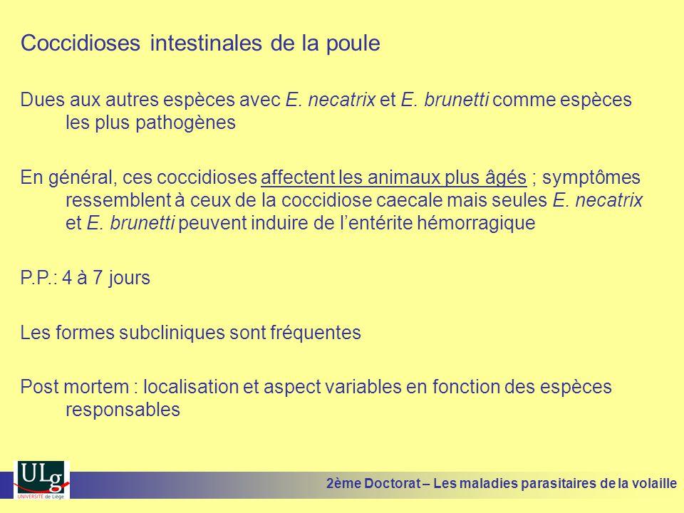 Coccidioses intestinales de la poule