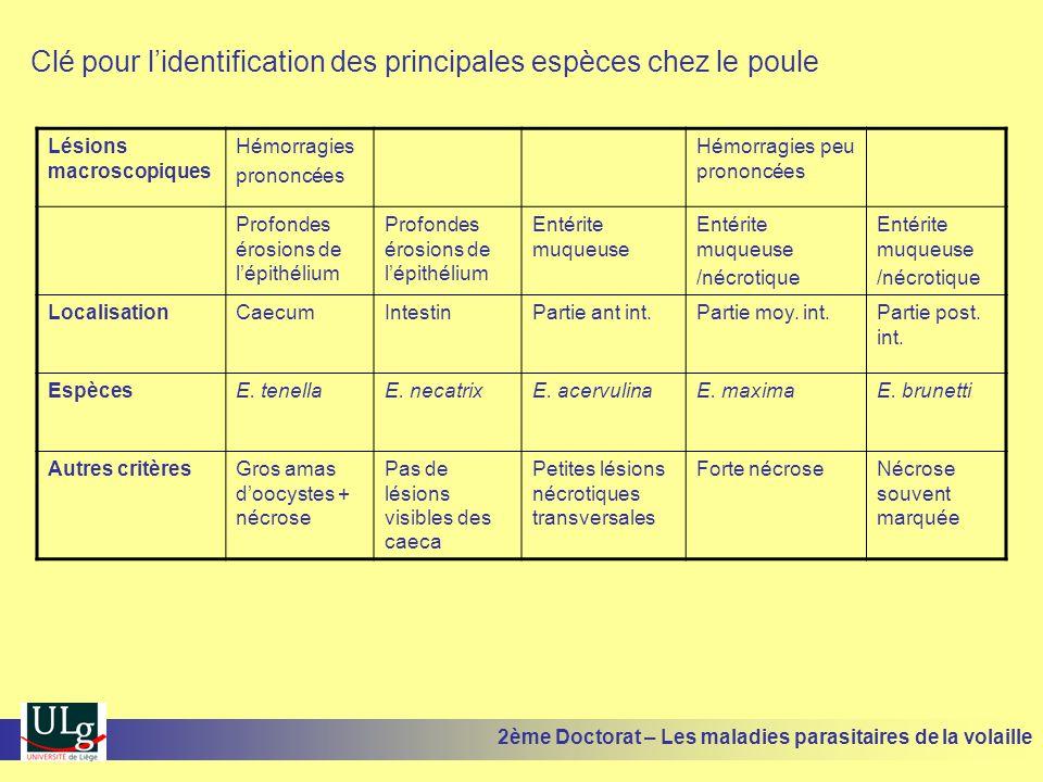 Clé pour l'identification des principales espèces chez le poule