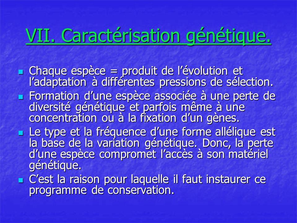 VII. Caractérisation génétique.