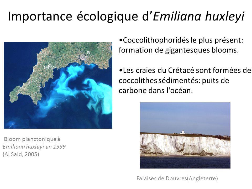 Importance écologique d'Emiliana huxleyi