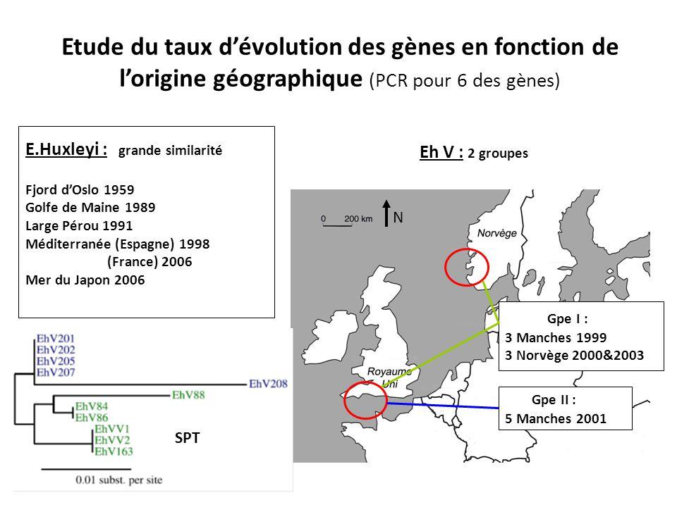 Etude du taux d'évolution des gènes en fonction de l'origine géographique (PCR pour 6 des gènes)