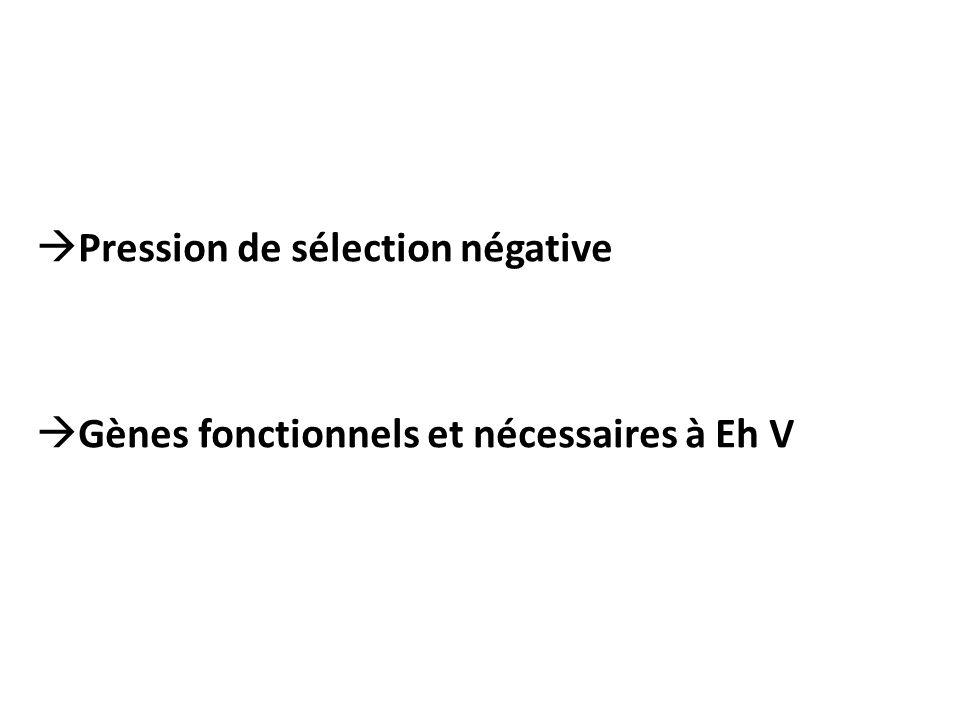 Pression de sélection négative