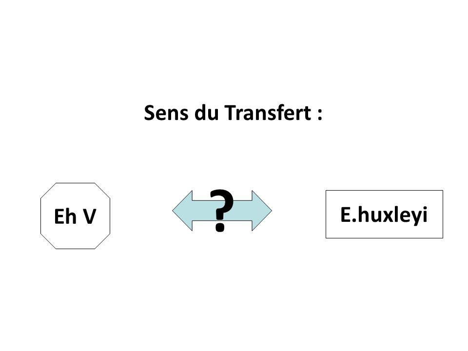 Sens du Transfert : Eh V E.huxleyi 26