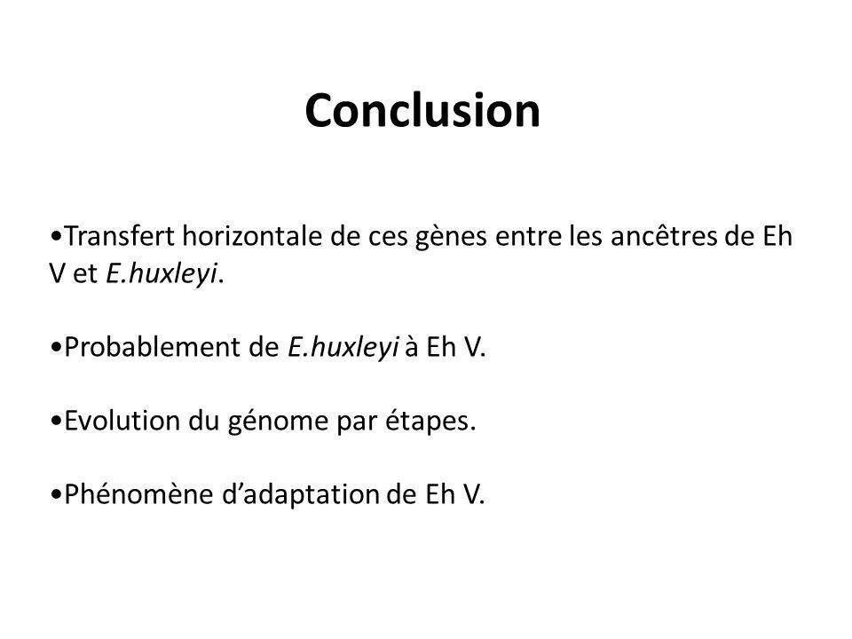 Conclusion •Transfert horizontale de ces gènes entre les ancêtres de Eh V et E.huxleyi. •Probablement de E.huxleyi à Eh V.