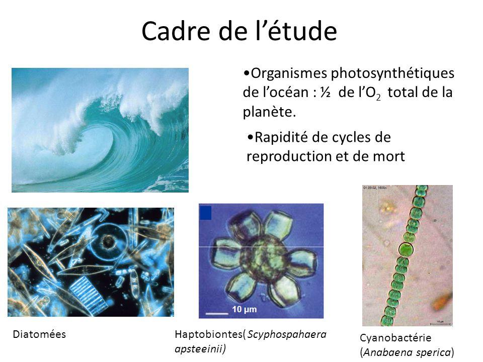 Cadre de l'étude •Organismes photosynthétiques de l'océan : ½ de l'O2 total de la planète. •Rapidité de cycles de reproduction et de mort.