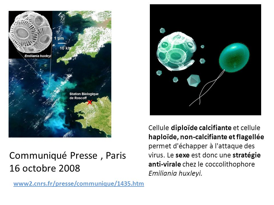 Communiqué Presse , Paris 16 octobre 2008