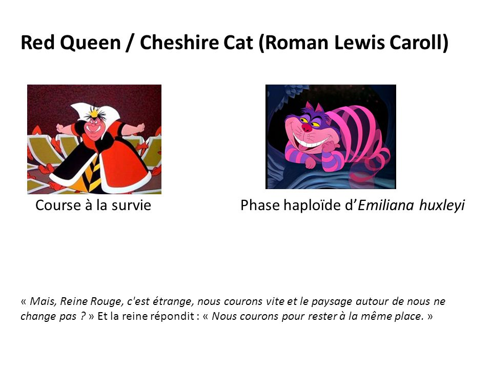 Red Queen / Cheshire Cat (Roman Lewis Caroll)