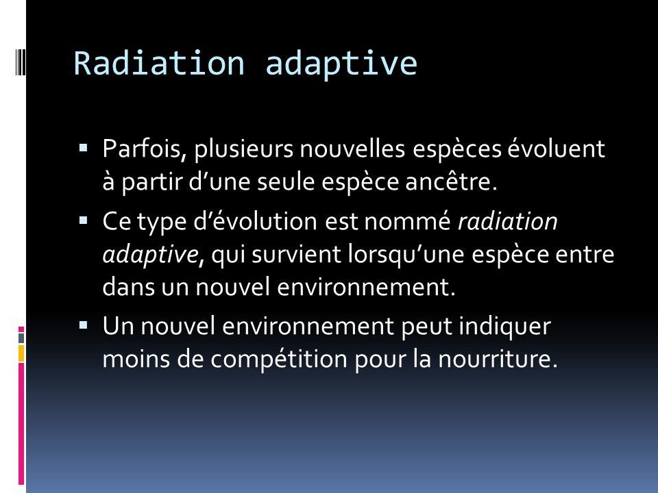 Radiation adaptive Parfois, plusieurs nouvelles espèces évoluent à partir d'une seule espèce ancêtre.