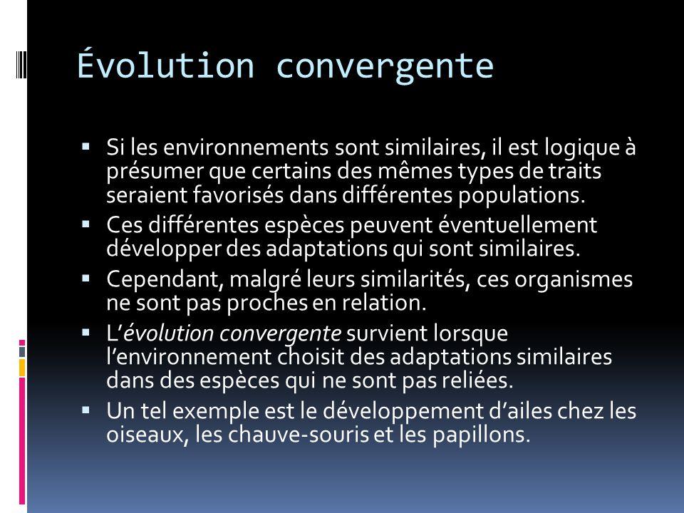 Évolution convergente