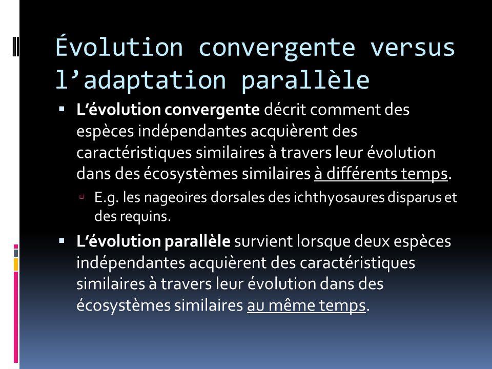 Évolution convergente versus l'adaptation parallèle