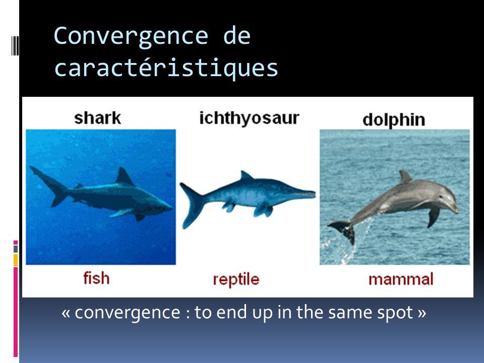 Convergence de caractéristiques