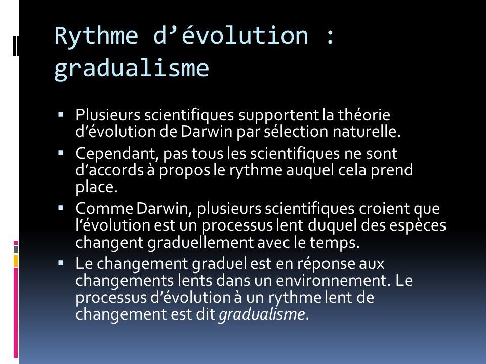 Rythme d'évolution : gradualisme
