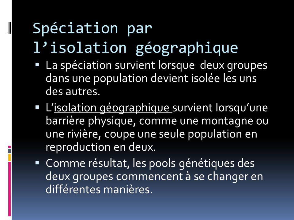 Spéciation par l'isolation géographique