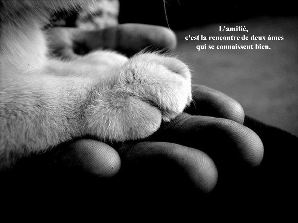 L amitié, c est la rencontre de deux âmes qui se connaissent bien,