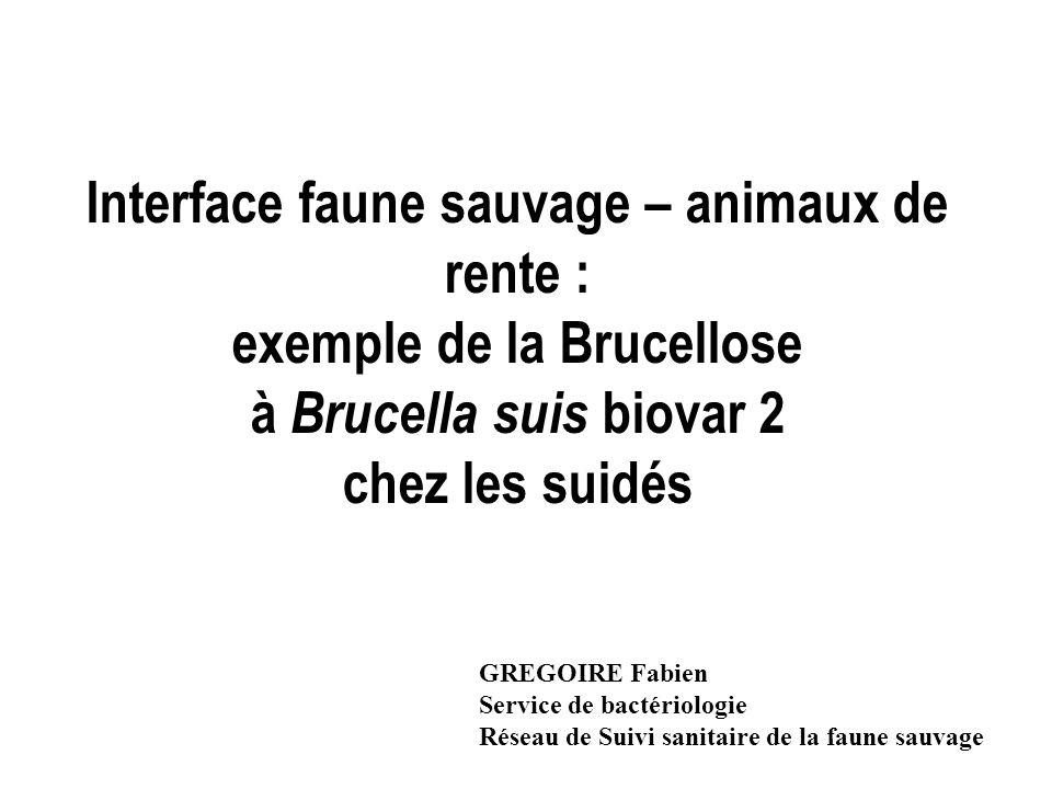 Interface faune sauvage – animaux de rente : exemple de la Brucellose à Brucella suis biovar 2 chez les suidés