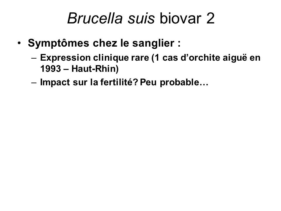Brucella suis biovar 2 Symptômes chez le sanglier :