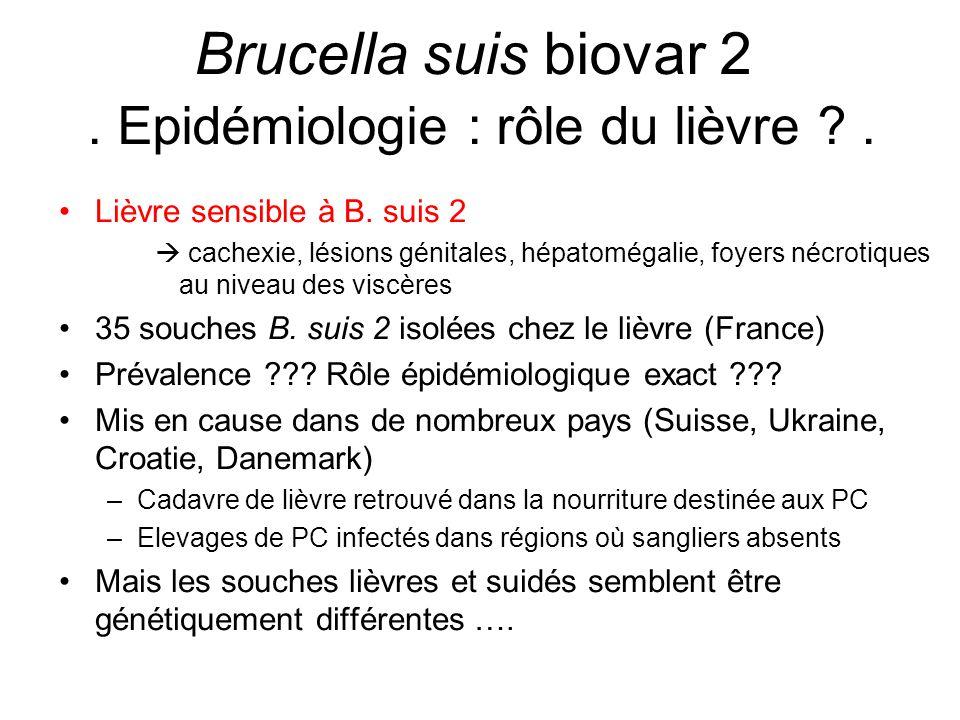 Brucella suis biovar 2 . Epidémiologie : rôle du lièvre .