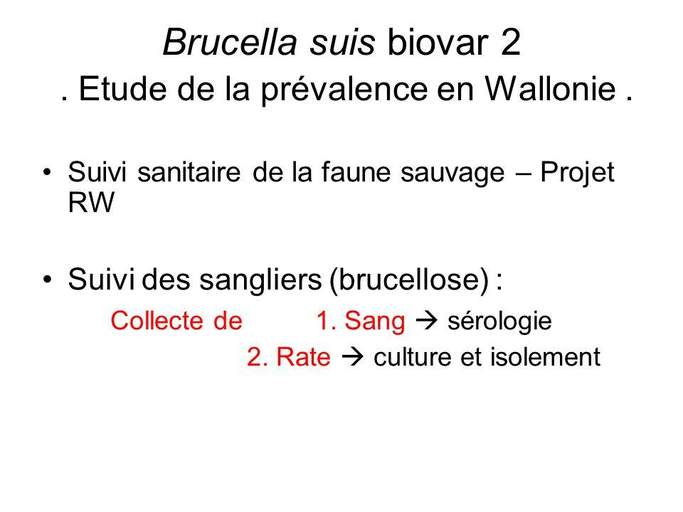 Brucella suis biovar 2 . Etude de la prévalence en Wallonie .