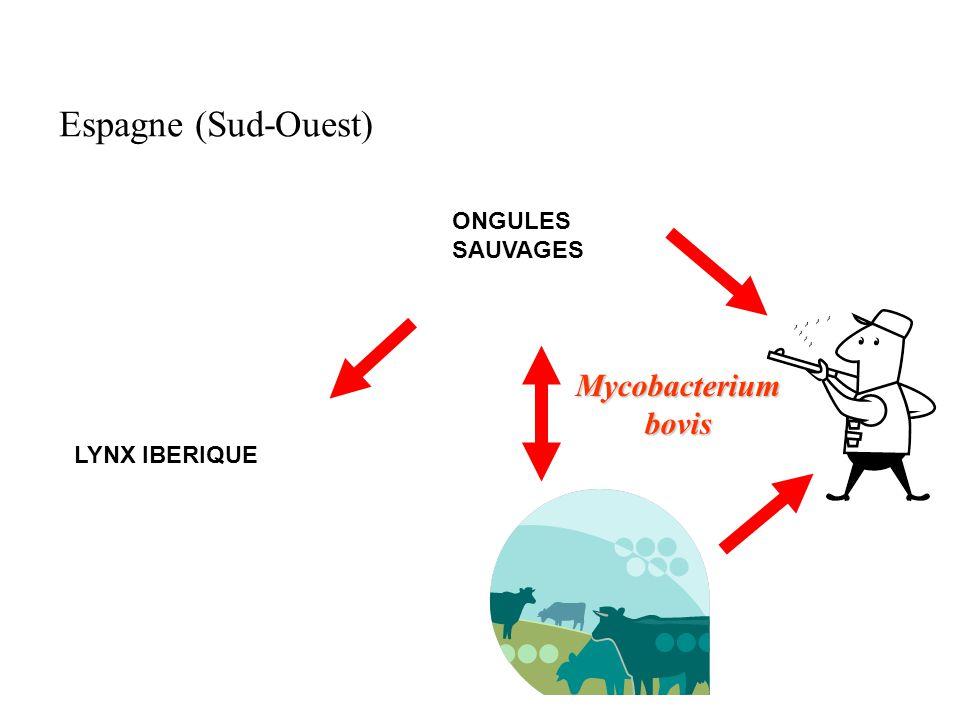 Espagne (Sud-Ouest) ONGULES SAUVAGES Mycobacterium bovis LYNX IBERIQUE