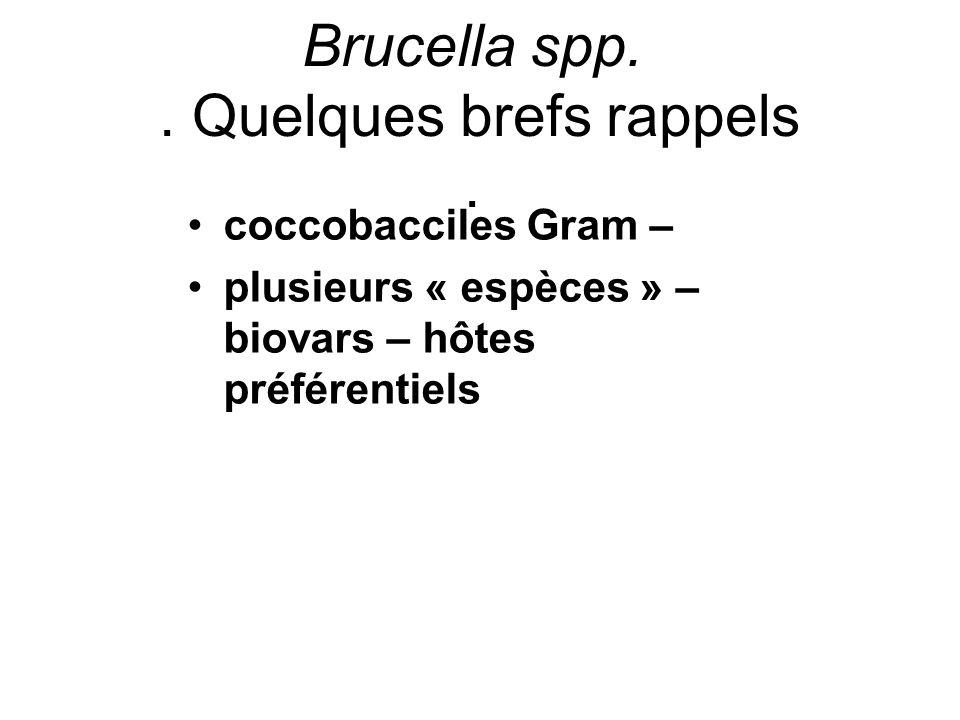 Brucella spp. . Quelques brefs rappels .