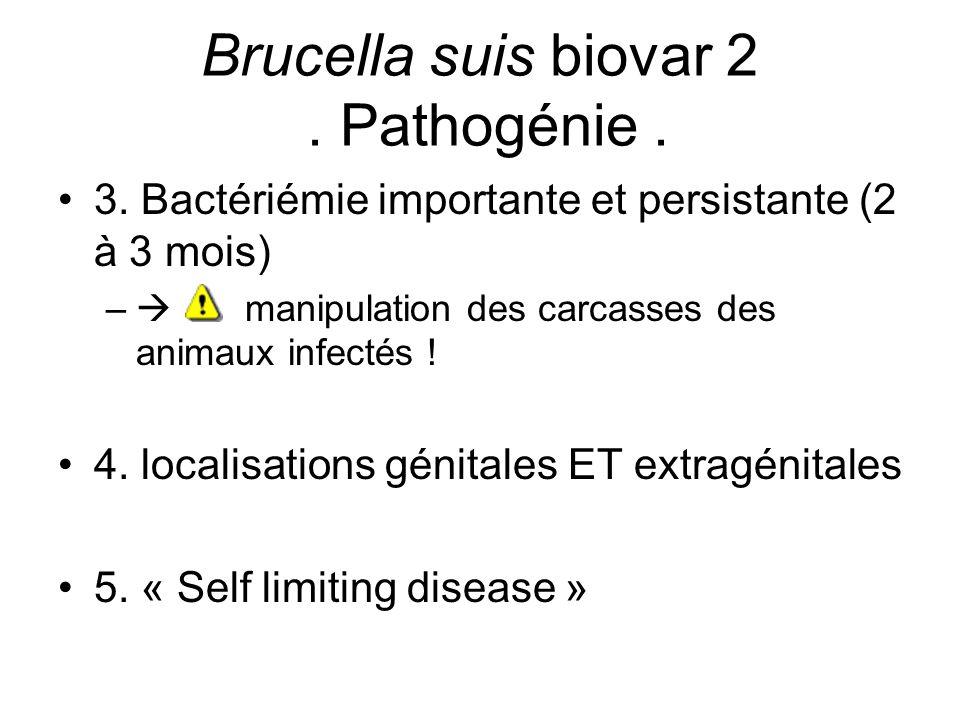 Brucella suis biovar 2 . Pathogénie .